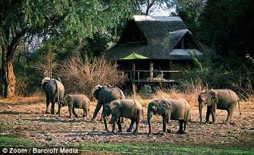 Mfuwe Lodge Elefanter