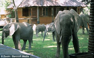 Mfuwe Lodge Elefanter