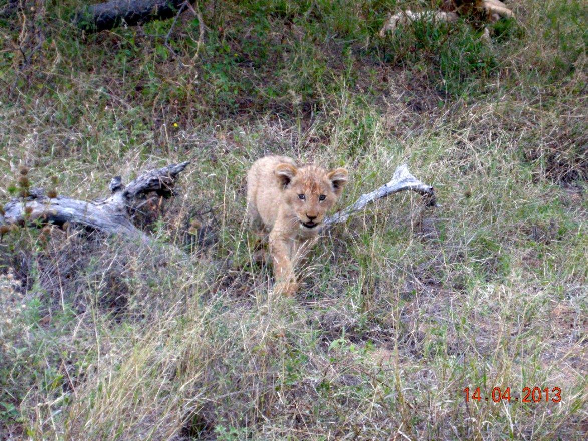 lejon Mohlabetsi Safari Lodge