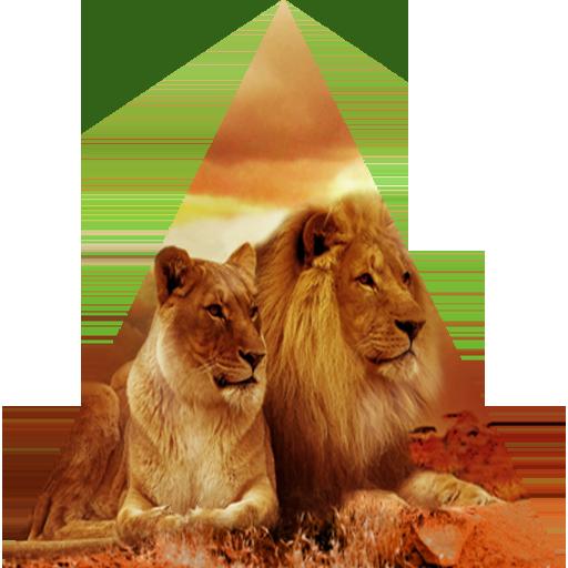 Lejon Safari Sydafrika