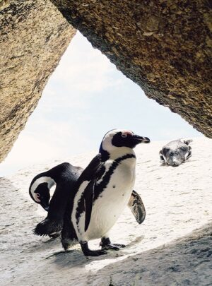 boulders beach in simons town by Jack young from unsplash